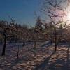 Hasznos tanácsok gyümölcsfáink téli védelméhez