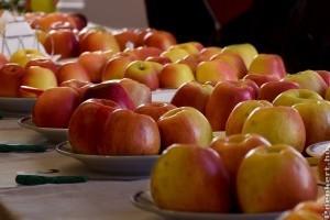 Ők lesznek a jövő almafajtái?
