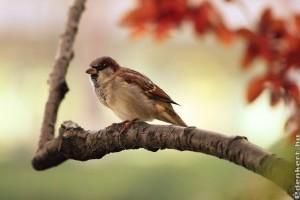 Petició az Orczy-kertért: Jobb levegőt, több zöldterületet és több fát!