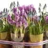 3 virág ötlet Valentin napra