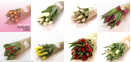 tulipancsokrok