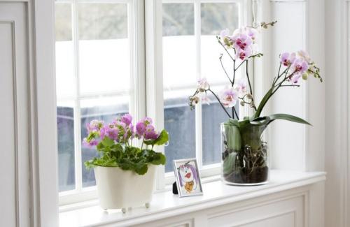 orchidea_tavasz