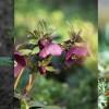 Ilyen csodás a tavasz a pécsi botanikus kertben