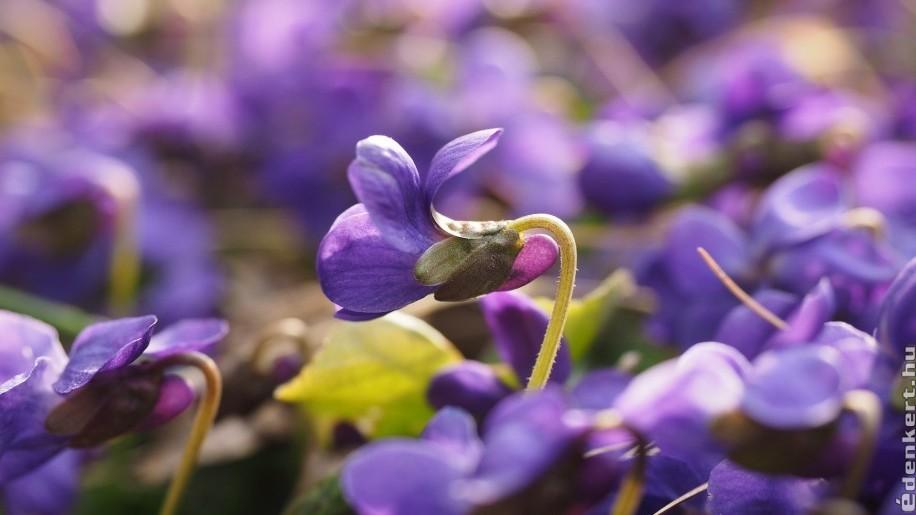 3+1 virág, amit meg lehet enni