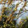 Megkezdődött a pollenszezon: kertészkedés allergiásan?