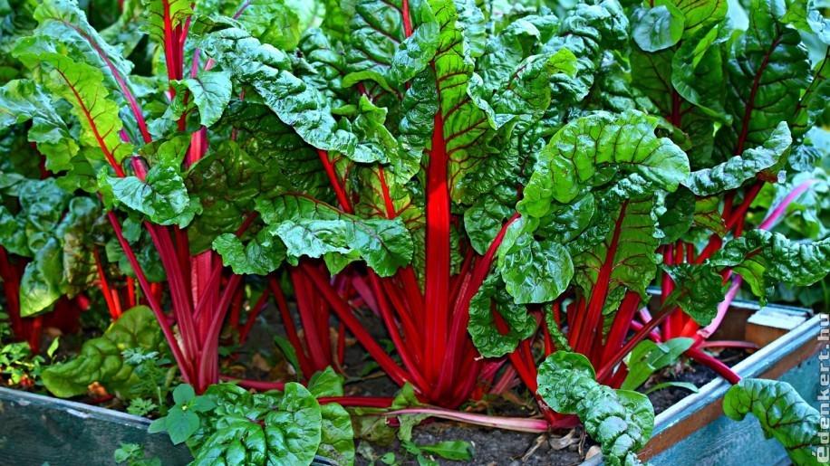 8 zöldség, ami szépen fejlődik félárnyékos helyen is