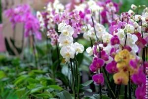 11 tipp, hogy a tiéd legyen a környék legszebb orchideája!