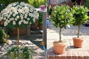 5 tipp magas törzsű növények ápolásához