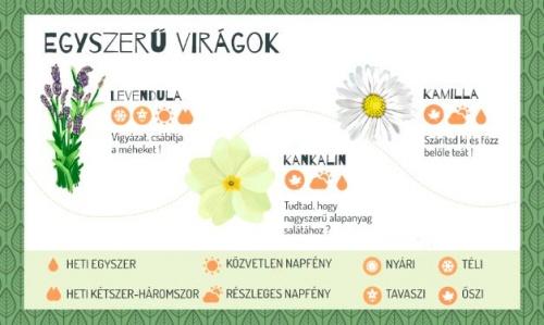 zold_erkely_viragok