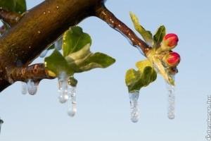 Így működik a fagyvédelmi öntözés - videó