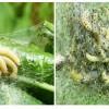 Mindent behálóznak a pókhálós molyok