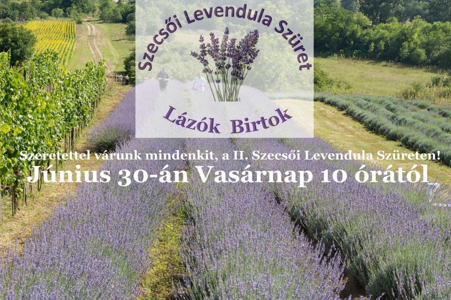 szecsoi_levendula_szuret