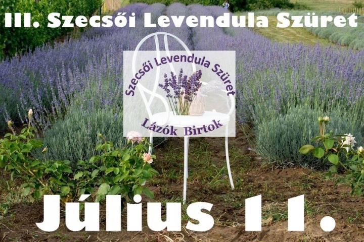 szecsoi_levendula_szuret_2020