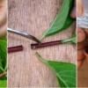 Nyári félfás dugványozás 1x1: így szaporíthatod kedvenc növényeid