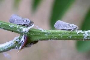 Júliusi növényvédelmi előrejelzés