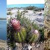 A Karib–tengeren nem csak a kalózok hírhedtek, érdekesek a kaktuszok is