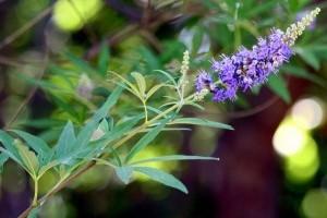 11 ok, hogy miért díszítsd változatos cserjékkel a kerted