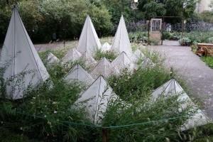 Első helyezett lett a Főkert Zrt. kertje a Tallinni virágfesztiválon
