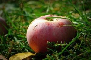 Rossz helyzetben van a magyar almatermesztés