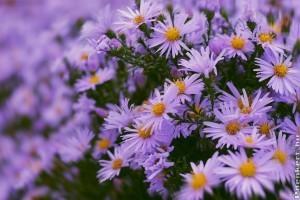 5 őszi szépséges virág a kertben