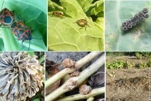 Maradt még néhány őszi növényvédelmi tennivaló