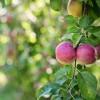 Őszi kertészkedés a holdnaptár segítségével