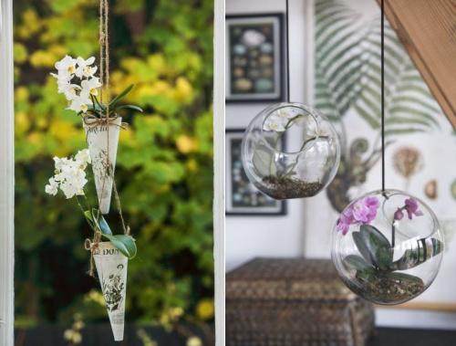 orchidea_telen