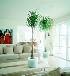 Tágas terek növénye a buzogányfa