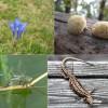 2018 madara, fája, virága, emlőse, rovara és gombája