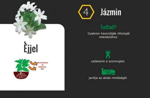 haloszobaba_jazmin