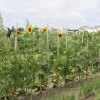 Biogazdálkodási együttműködés bécsi mintára