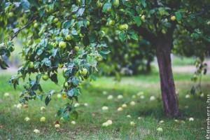 Koronaformák és gyümölcsfák, mikor melyik ajánlott?
