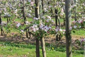 KSH: csütörtökig tölthető ki online a gyümölcsösültetvény-összeírás kérdőíve