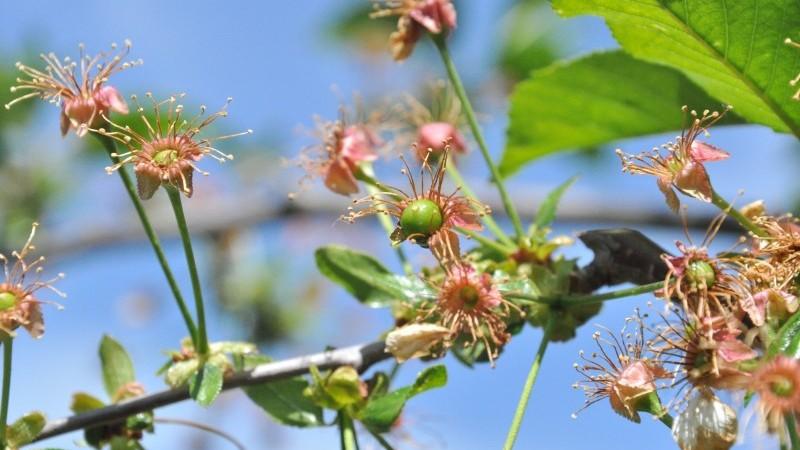Érdemes-e növénykondicionálóval támogatnom a növényeimet?