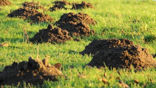 Vakondtúrás a fűben