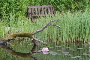 Meditáció egy metszőollóval - mindfulness a kertben