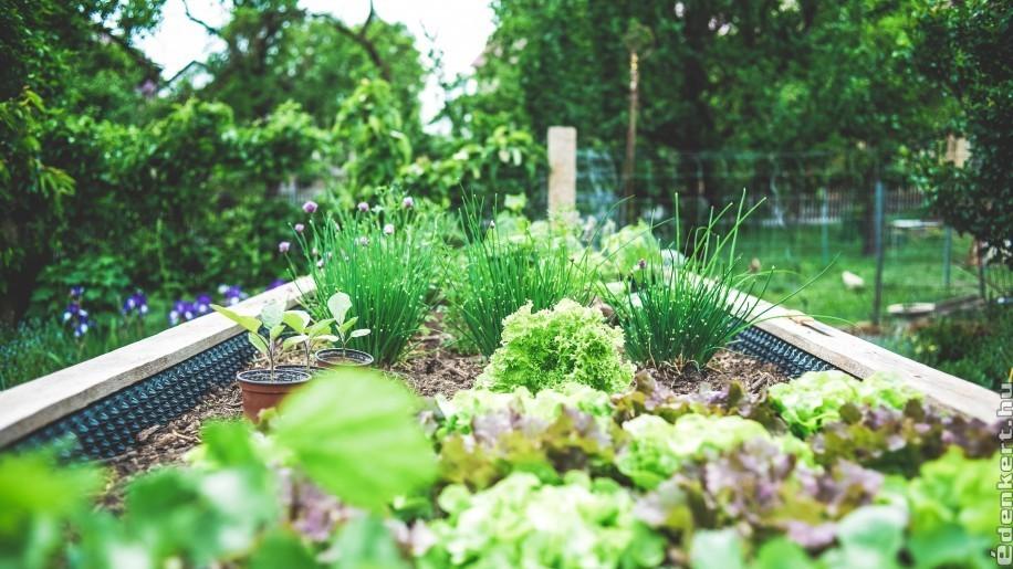 Növényszomszédok: fontos a jó párosítás