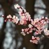 FruitVeB: a tavaszi fagy legjobban a kajszibarackot sújtotta