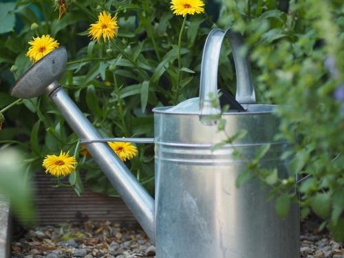 garden-2497476_1280