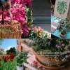 Hétvégére virágtengerré változik a Budai Arborétum