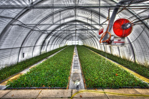 greenhouse-2546692_1280
