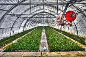 FruitVeB: idén több hajtatott zöldséget takaríthatnak be a termelők