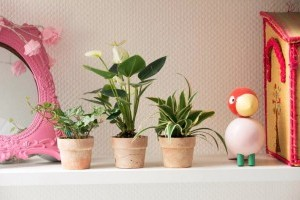 Használjuk ki a szobanövények jótékony hatásait