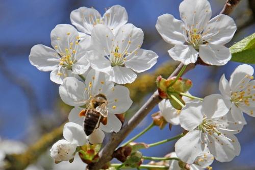 flower-3321252_1280
