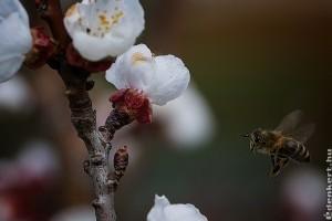 Permetezéskor vigyázzunk a méhekre!