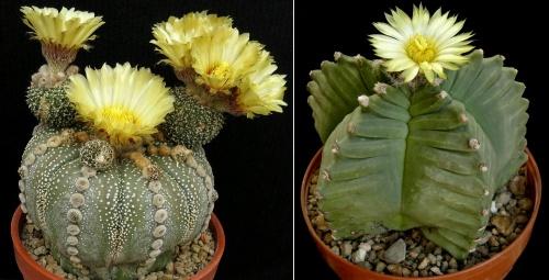 kaktusz2018