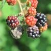 A szélsőséges időjárást jobban bírják a jóltáplált növények