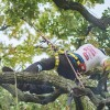 Izgalmas faápoló verseny a magasban