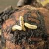 Otthonra talált rovarmigránsok veszélyeztetik a szőlőt, diót, puszpángot