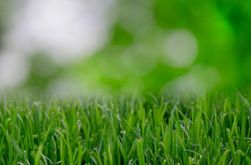 grass-821535_1280